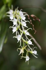 orchidée - parc du palmarium