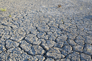 dried lakebed #3