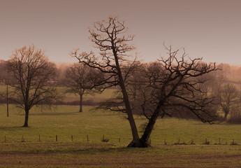 0287-arbres en silhouette