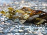 Fototapety algues