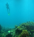 free diving snorkeler poster
