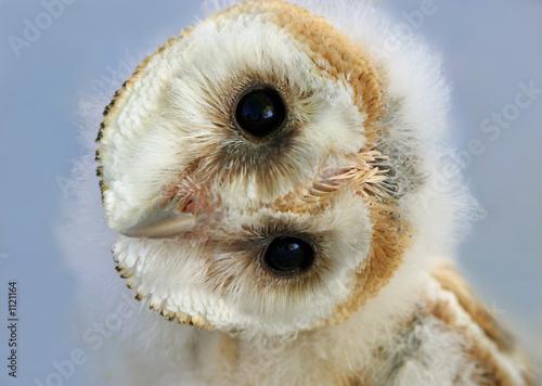 Aluminium Uil baby barn owl