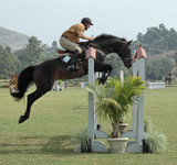 show horse & rider jumping a gate poster