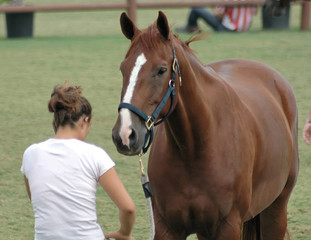 show horse & owner