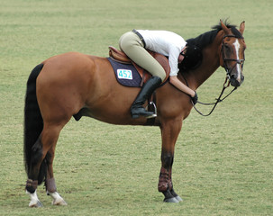 show horse & tired rider