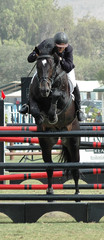 show jumper & rider