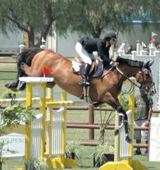 horse jumping a barrier