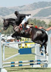 horse jumping a high gate