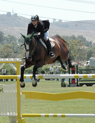 horse jumping a gate