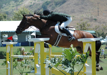 horse jumping an obstacle