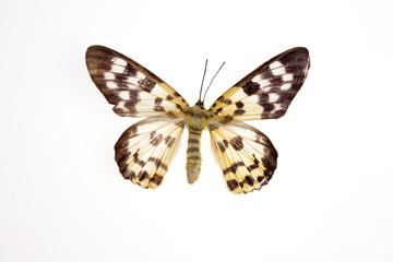 mariposas7843