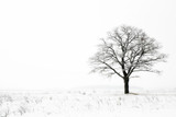 winter lonelyness