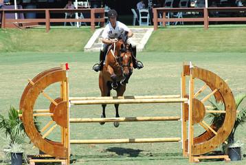 show horse jumping a barrier