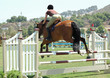 show horse & rider jumping a gate