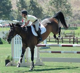 horse jumped a gate