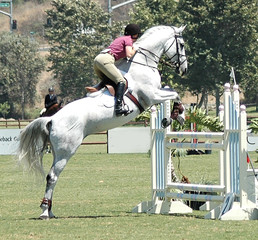 white show horse jumping