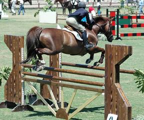 horse & rider jumping a barrier