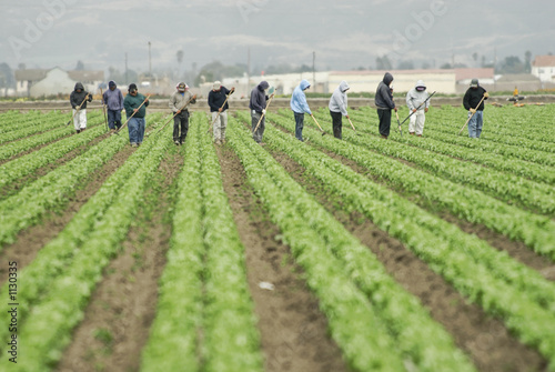 farm workers at work - 1130335