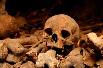 parisian skull