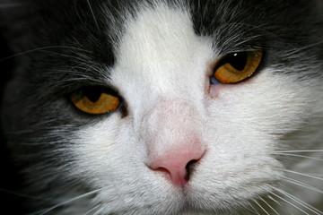 tilted head cat
