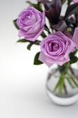 moody pink roses