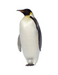 canvas print picture penguin