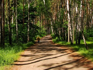 road in forest - 2