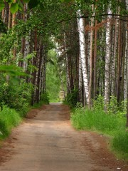 road in forest - 3