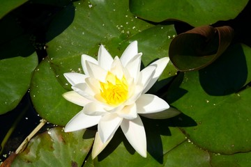 lilly water 1