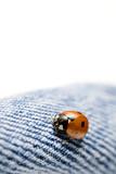 ladybug on blue jeans poster