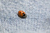ladybug on bluejeans poster
