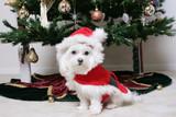 santa puppy poster