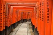 torii gates of fushimi inari shrine, kyoto, japan