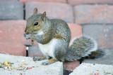 brickyard squirrel poster