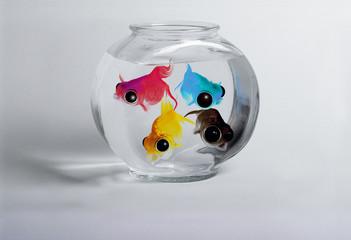 poissons cmjn