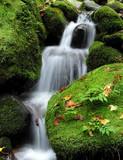 Wodospad w lesie - 1173339