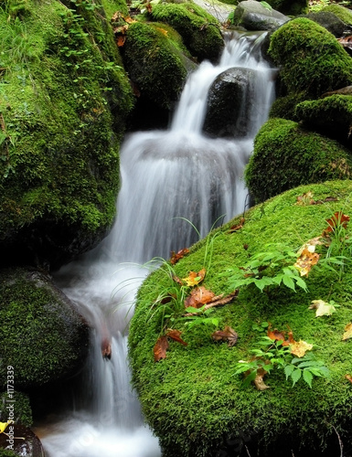 waterfall in the forest - 1173339