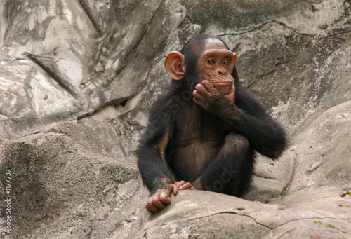In de dag Aap little chimpanzee