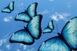 Quadro ciel et papillon