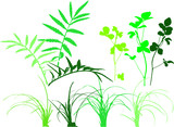 foliage patterns - plants, grass, leaves, herbs poster