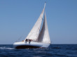 canvas print picture sailing in regatta with strong wind
