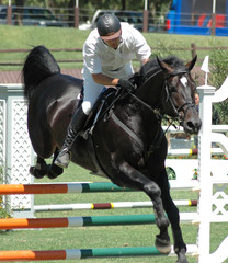 black show horse clearing barrier