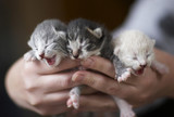 one-week old kittens