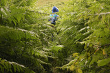 hiker in the fern poster