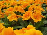 Fototapety blütenpracht