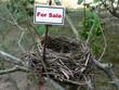 bird nest - real estate 2