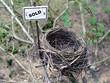 bird nest - real estate 3