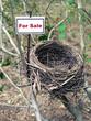 bird nest - real estate 5