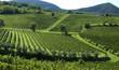 italian vineyards 6