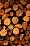 got wood! poster